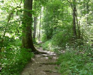 Flat_Rock_Path
