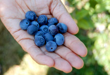 blueberryhand