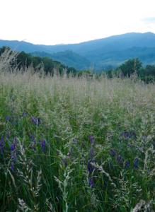 hayfield & mountains