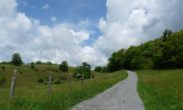 path by pasture