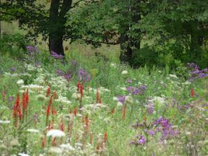 august-flower-field